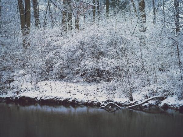 Nature Color 5601 Photography Art | Dan Chung Fine Art