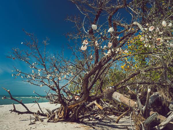 Nature Color 8023 Photography Art | Dan Chung Fine Art