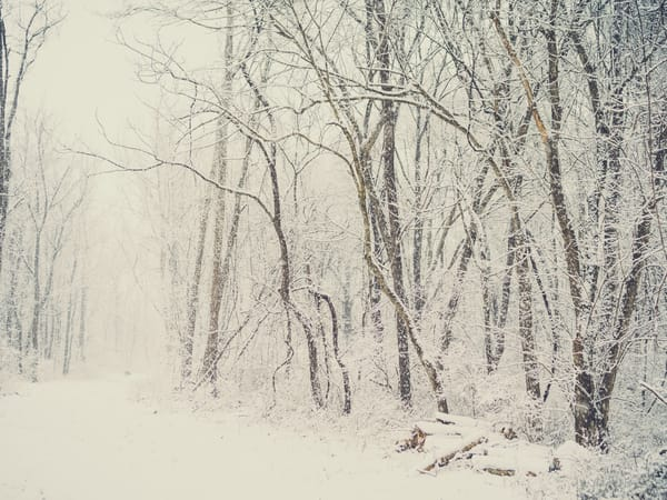 Nature Color 7885 Photography Art | Dan Chung Fine Art