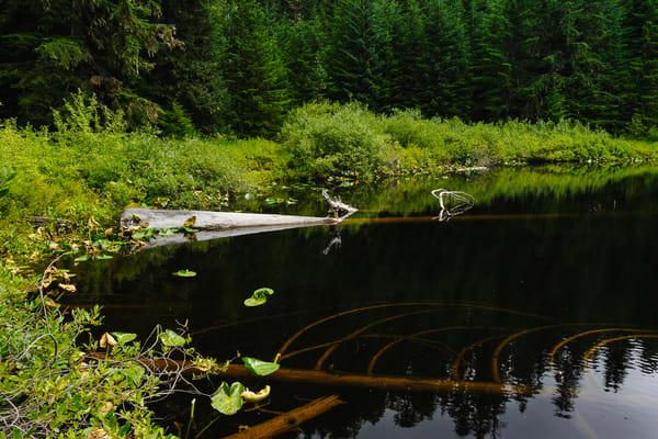 Unknown Lake, Lewis County, Washington, 2016