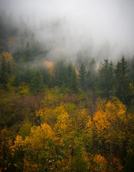Misty Fall Pnw Photography Art | Call of the Mountains Photography