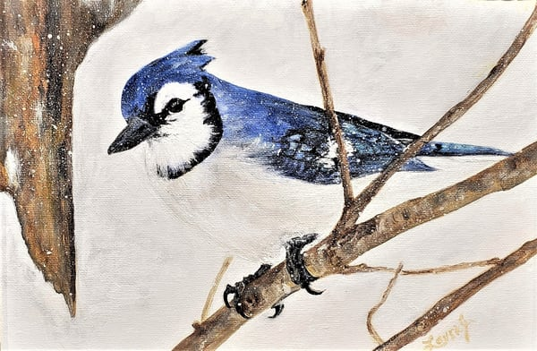 Blue Jay In Snow  Art | artalacarte