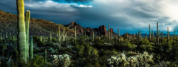 Saguaro National Park, Arizona #4 _ by Varial