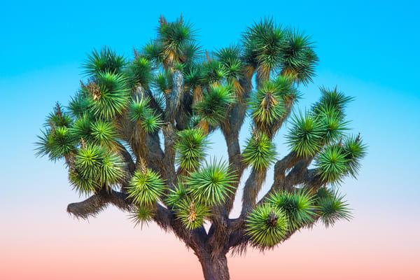 Joshua Tree #1, by Varial*