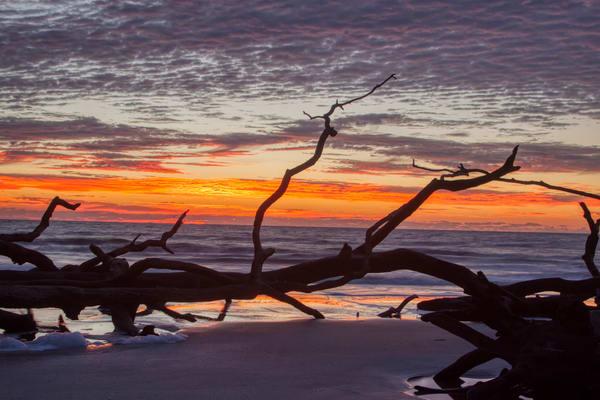 Fallen Trees At Sunrise Art | Willard R Smith Photography