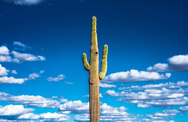 Saguaro National Park, Arizona #5 _ by Varial