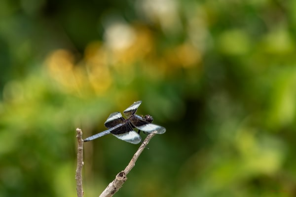 Dragonflies G  Mg 6624 20 Fs Koral Martin Photography Art | Koral Martin Fine Art Photography