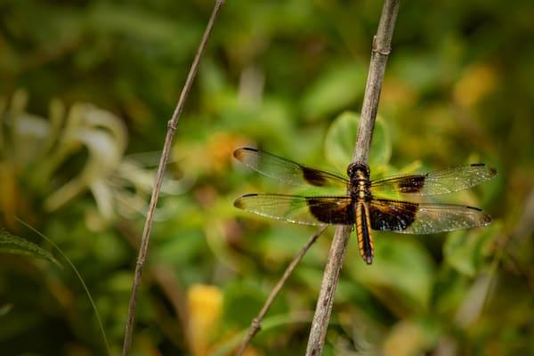 Dragonflies G  Mg 6620 20 Fs Koral Martin Photography Art | Koral Martin Fine Art Photography
