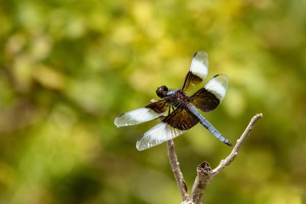 Dragonflies  6631  Art | Koral Martin Fine Art Photography