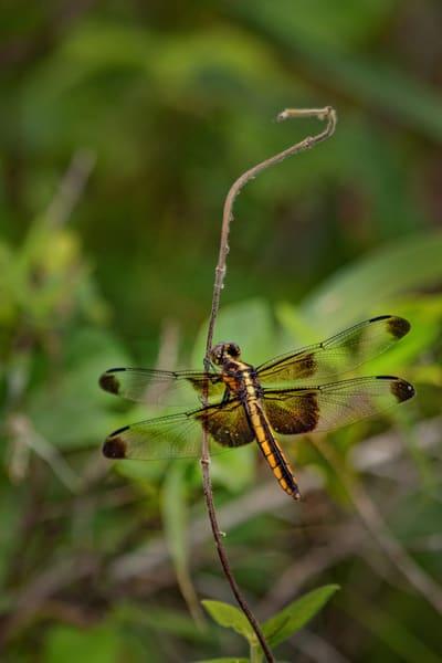 Dragonflies  6640  Art | Koral Martin Fine Art Photography
