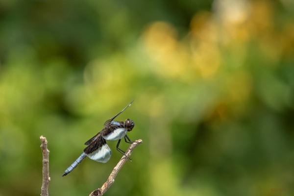 Dragonflies G2     6628  Art | Koral Martin Fine Art Photography