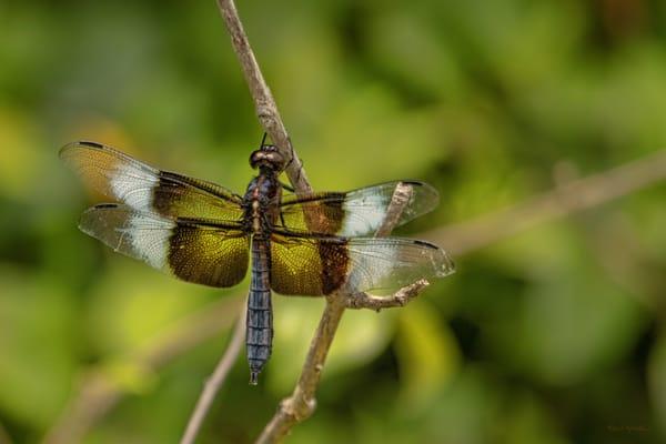 Dragonflies G  Mg 6734 20 Fs Koral Martin Photography Art | Koral Martin Fine Art Photography