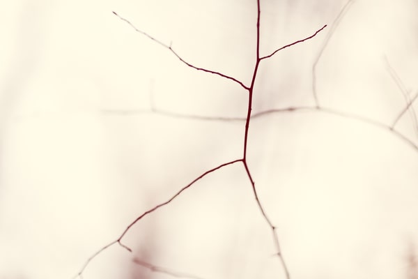 Nature Bw  2 Photography Art | Dan Chung Fine Art