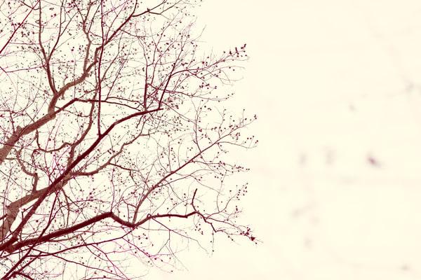 Nature Bw  3 Photography Art | Dan Chung Fine Art