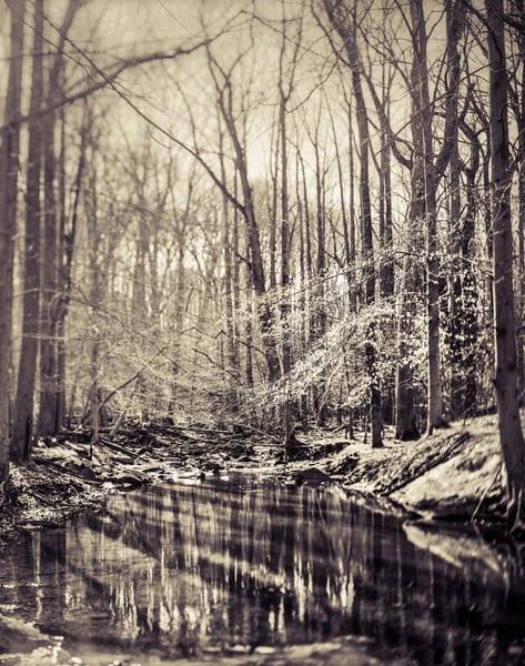 Nature Bw 03 2 Photography Art | Dan Chung Fine Art