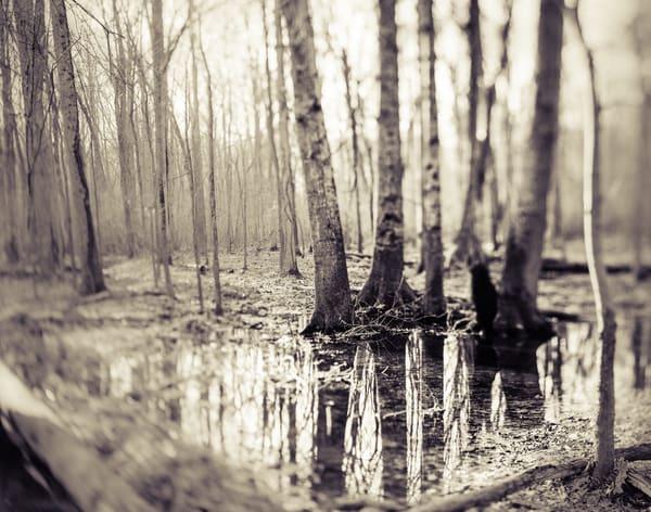 Nature Bw 07 Photography Art | Dan Chung Fine Art