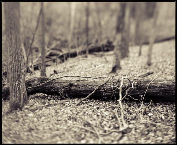 Nature Bw 014 Photography Art | Dan Chung Fine Art