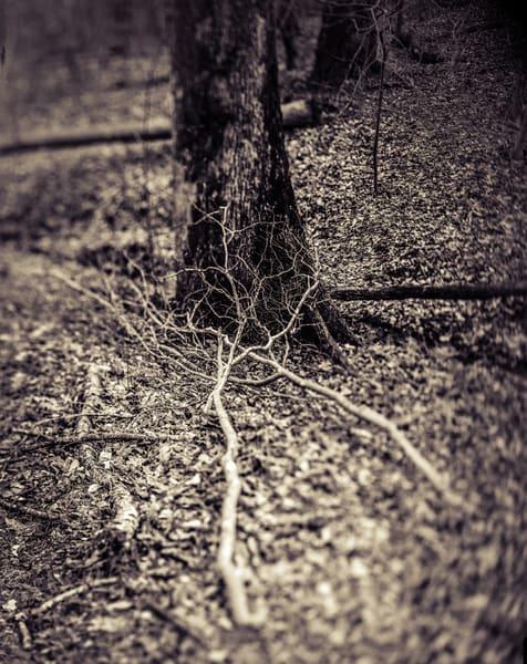 Nature Bw 11 Photography Art | Dan Chung Fine Art