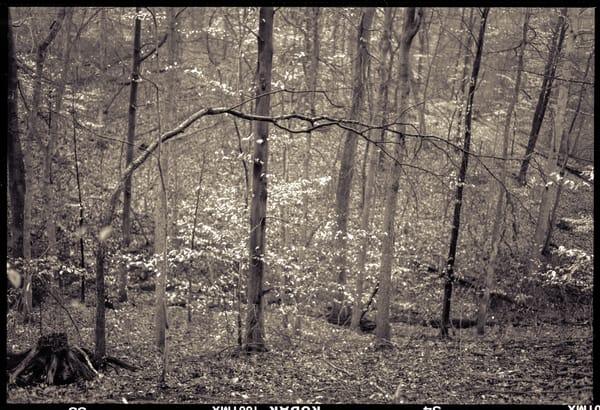 Nature Bw 013 Photography Art | Dan Chung Fine Art