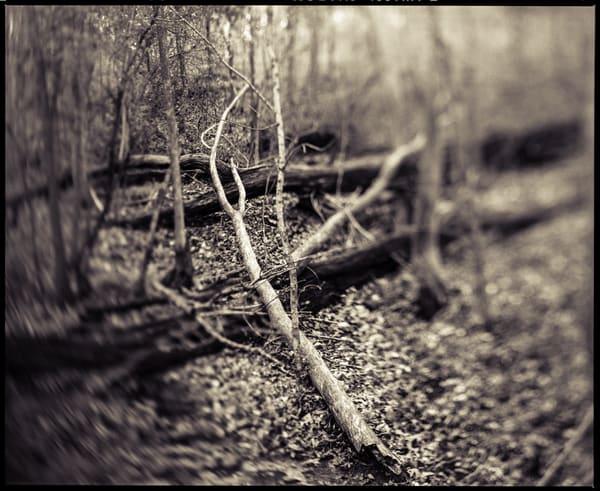 Nature Bw 019 Photography Art | Dan Chung Fine Art