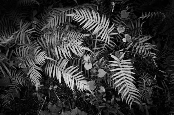 Nature Bw 0000129 Photography Art | Dan Chung Fine Art