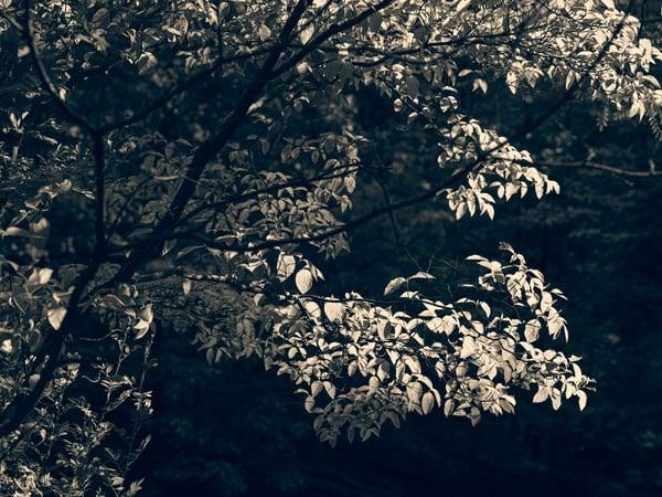 Nature Bw 0451 Photography Art   Dan Chung Fine Art