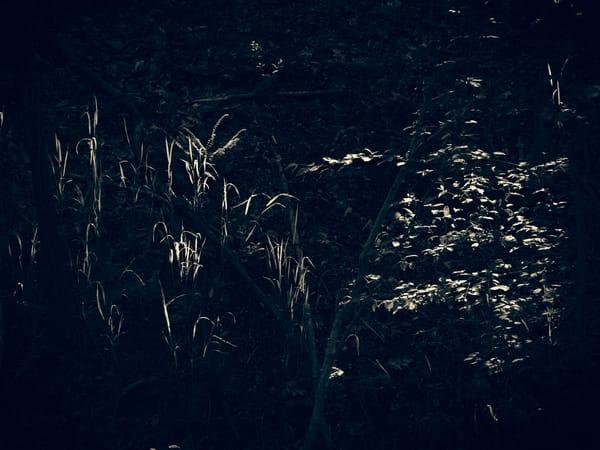 Nature Bw 0494 Photography Art | Dan Chung Fine Art