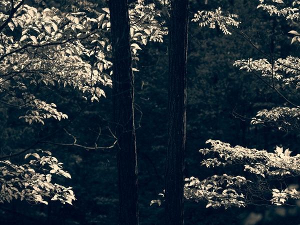 Nature Bw 0453 Photography Art | Dan Chung Fine Art