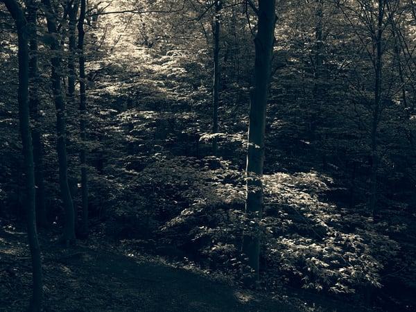 Nature Bw 0542 Photography Art | Dan Chung Fine Art