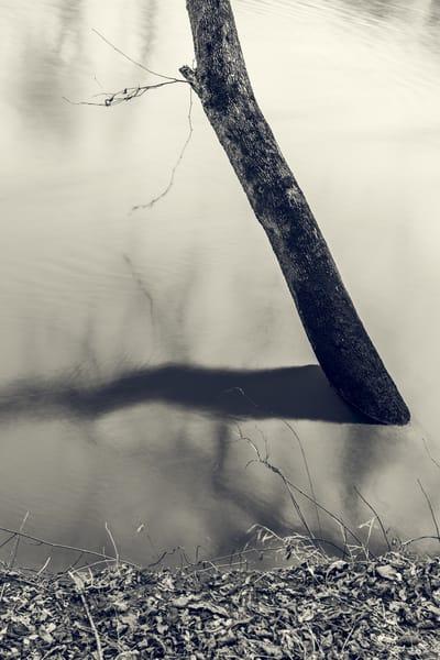 Nature Bw 1977 Photography Art | Dan Chung Fine Art