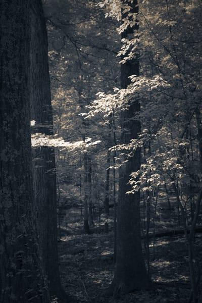 Nature Bw 4177 Photography Art | Dan Chung Fine Art