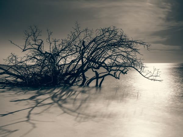 Nature Bw 8654 Photography Art | Dan Chung Fine Art