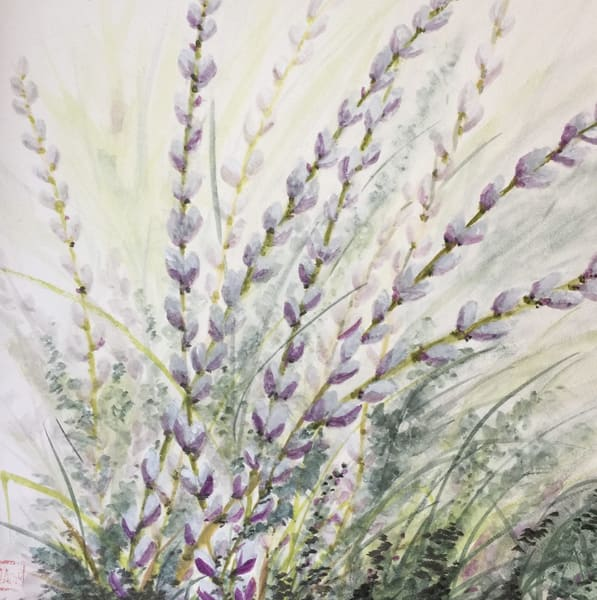 Vermont Pussywillows  Art | donnadacuti
