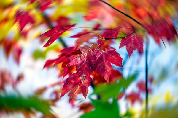 Colorful swirling leaves
