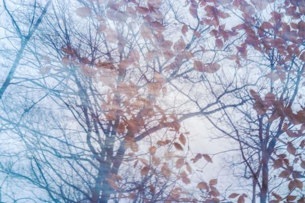 Nature Abstract 1494 Photography Art | Dan Chung Fine Art