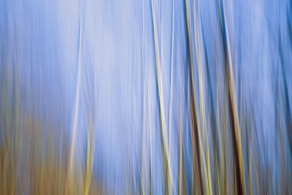 Nature Abstract 4659 Photography Art | Dan Chung Fine Art