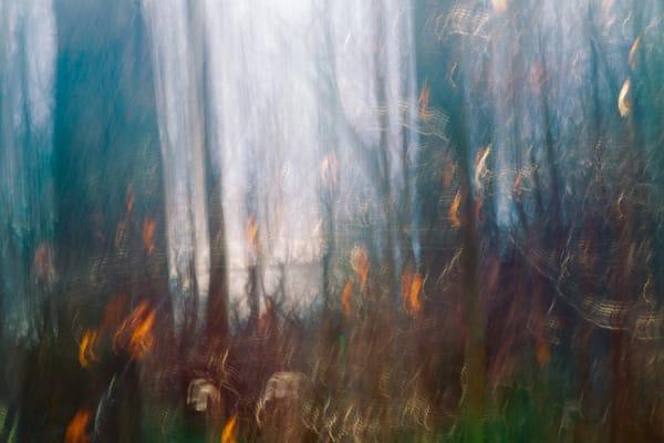 Leaves in Woods #1