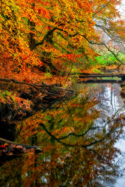 Fall scene reflecting in lake