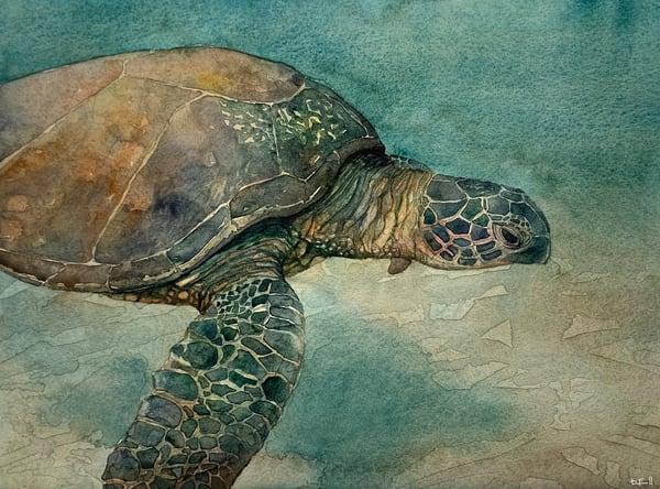 honu, sea, ocean, turtle, maui, hawaii, watercolor, art