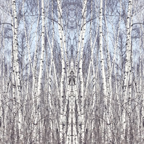 Birch Zen I Art | studio176