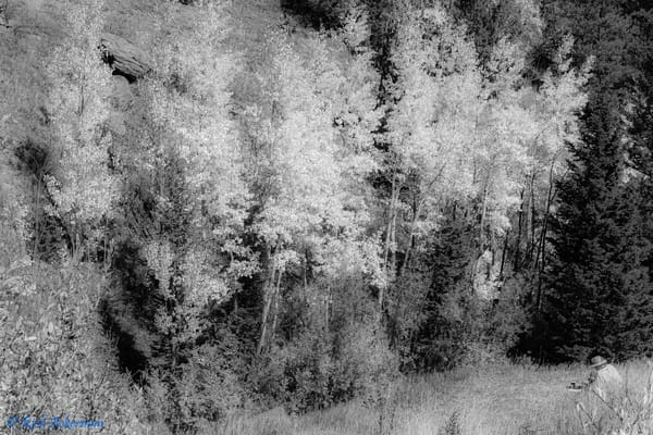 Artist Recreating the Aspen Pallet | Hidden Valley Trail RMNP