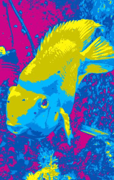 Pop Fish Ii Art   Studio Artistica