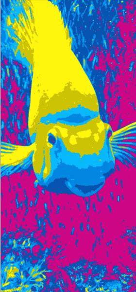Pop Fish I Art   Studio Artistica