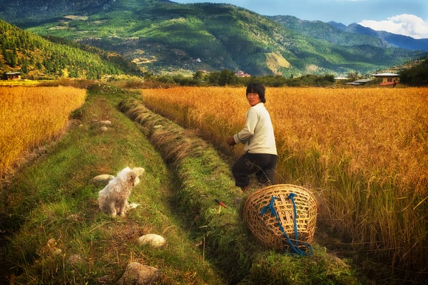 Bhutan Farming Photography Art | nancyney