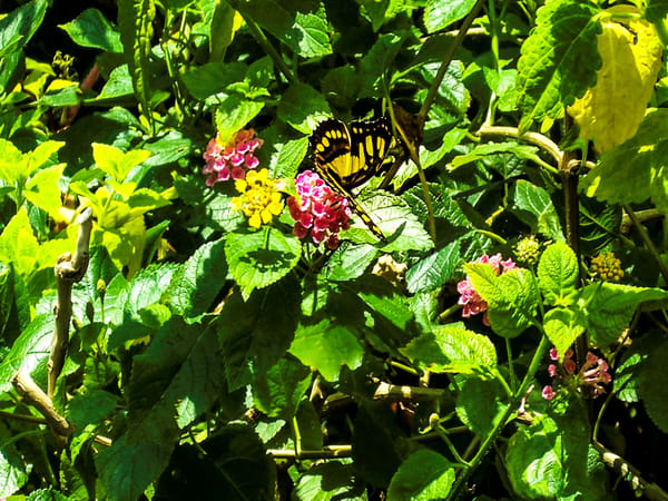 Butterfly Flowers Photography Art | N2 the Woods Photography - Nature and Wildlife Artwork