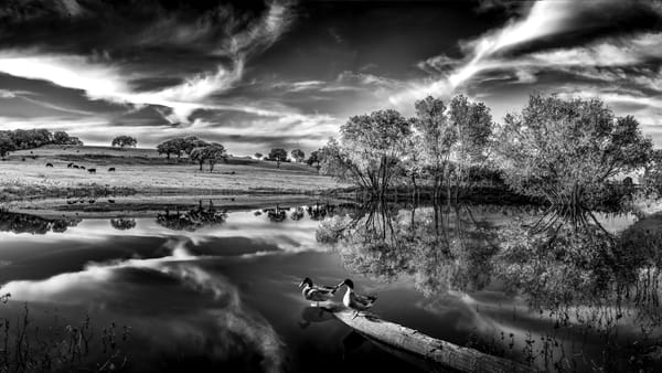 A Ducks Life Photography Art | Greg Woods Photography