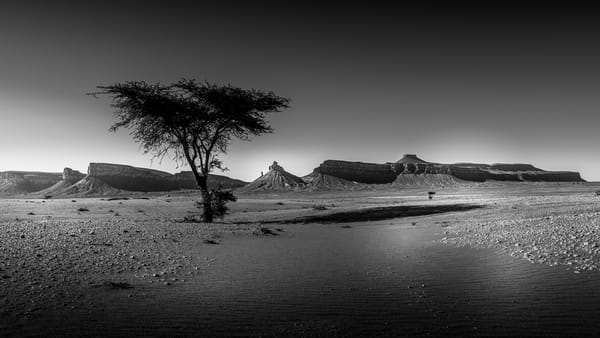 One Tree Morocco Photography Art | Greg Woods Photography