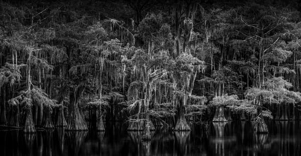 Swamp Things Photography Art | Greg Woods Photography