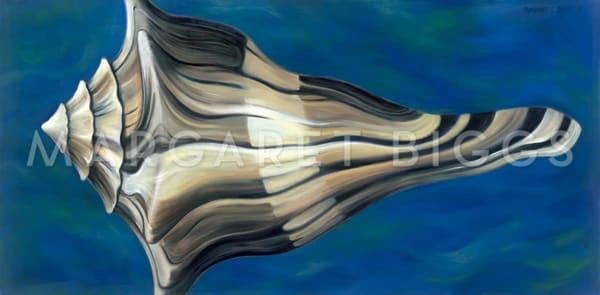 Knobbed Whelk Suspended Art | Margaret Biggs Fine Art