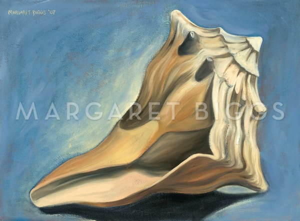 Knobbed Whelk With Shadow Art   Margaret Biggs Fine Art
